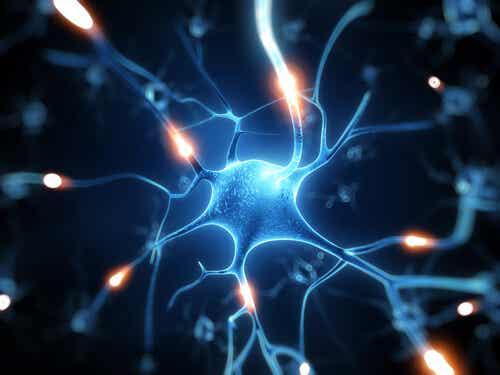 Resveratroli - erinomainen suoja aivoille