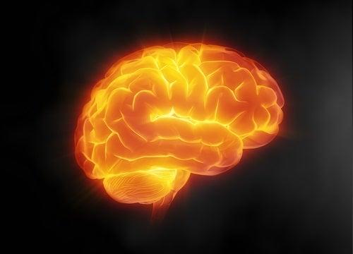 resveratroli suojaa aivoja