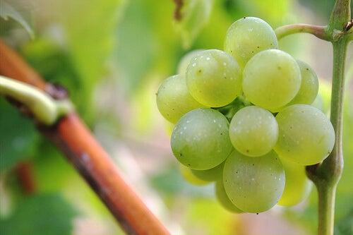 vältä närästys syömällä viinirypäleitä