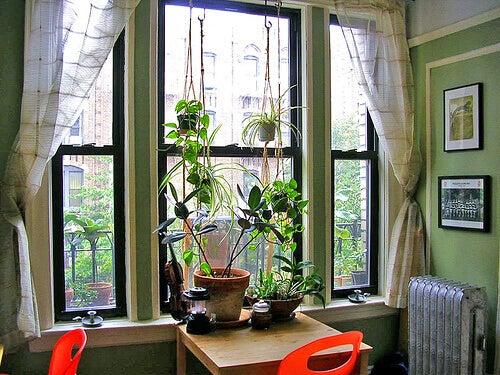 10 helppoa huonekasvia