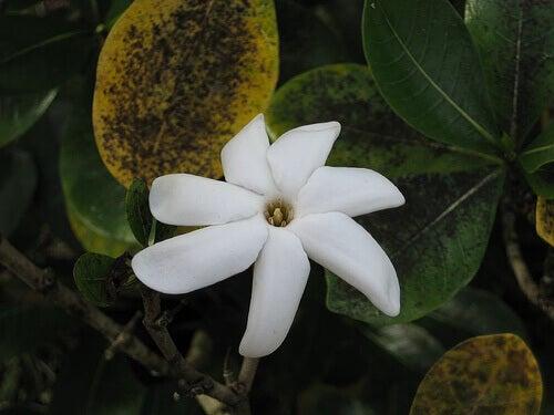 kukka-kukinto-ihmemaa