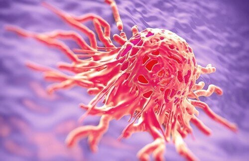 Lääkeyrtit, joita käytetään taistelussa syöpää vastaan