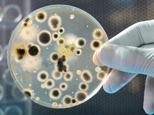 Kolikoissa ja seteleissä pesivät bakteerit