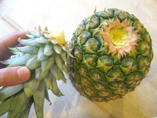 Ananaksen kasvatus alkaa ananaksen hatun poistamisella