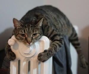 Jatkuva kylmä olo voi johtua anemiasta.