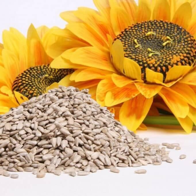 auringonkukansiemenet migreenin hoidossa