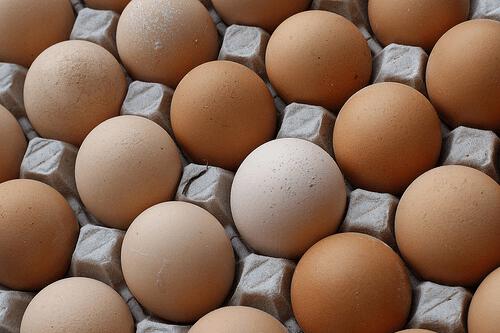 kananmunat kennossa