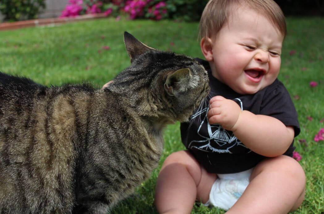 kissa kutittaa vauvaa