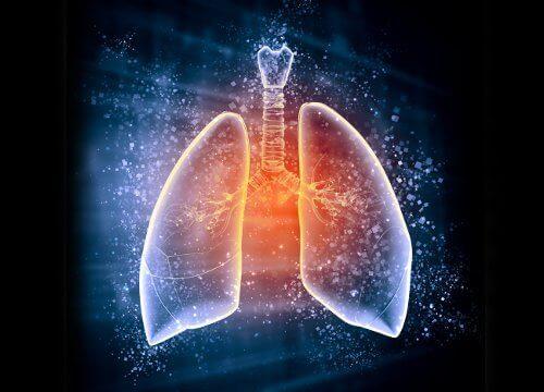 keuhkot2
