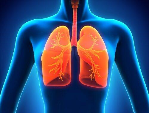 keuhkot3