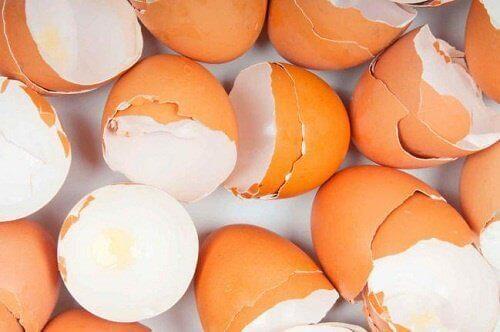 Kananmunan kuorien hyötykäyttö - 16 yllättävää tapaa