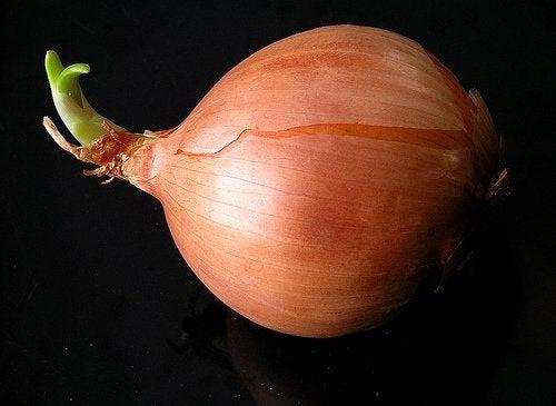 näin kasvatat sipuleita kotona