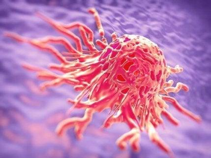 Kaura auttaa taistelemaan syöpää vastaan.