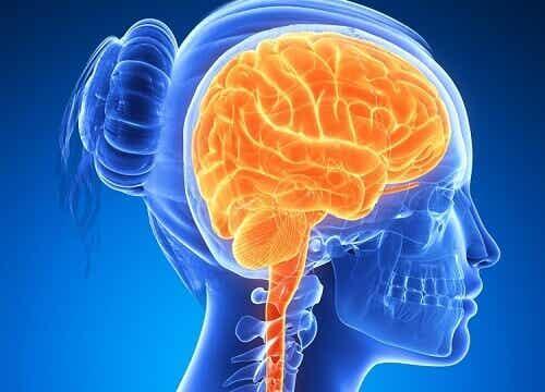 6 aivojen terveyttä parantavaa tuotetta