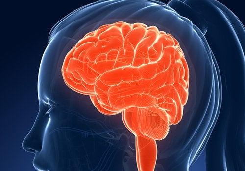 Aivot naisen päässä