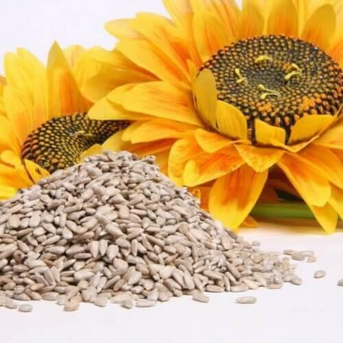 parhaat siemenet: auringonkukka