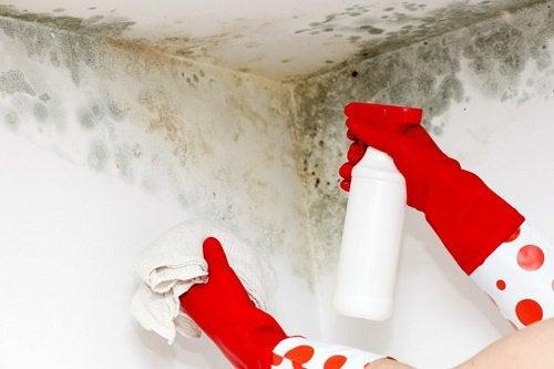 Poista hometta kotonasi luonnollisin keinoin