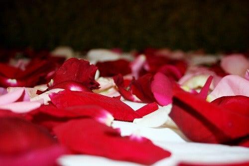 Ruusujen terälehdet