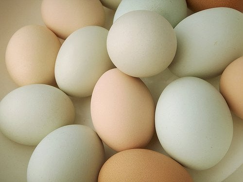 kasa kananmunia