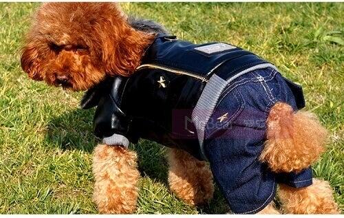 Koiran vaatteet farkuista