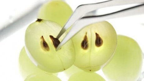 viinirypäleiden siemenet