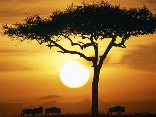 Afrikan kaunis maisema