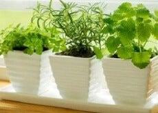 Vihreitä kasveja
