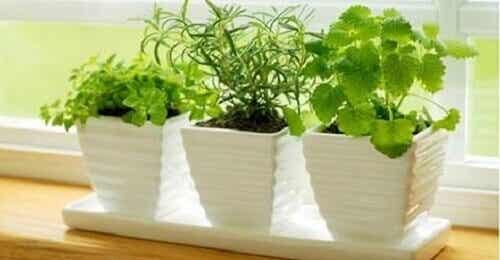 10 kasvia, jotka vetävät puoleensa positiivista energiaa