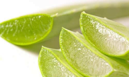 Aloe vera niveltulehduksessa
