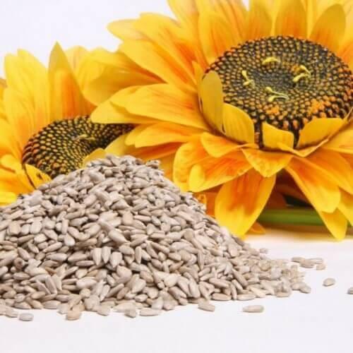 Auringonkukka ja sen siemenet