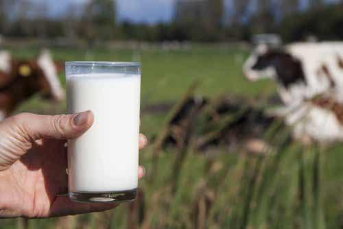 Miksi ihmisten ei kannata juoda lehmänmaitoa