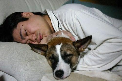 mies nukkuu koiran kanssa