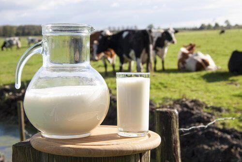 lehmänmaitoa