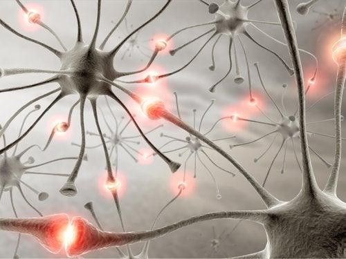 tämä tulee tietää nukkumisesta: se vaikuttaa aivoihin ja neuroneihin