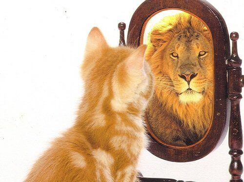 Kissan hyvä itsetunto