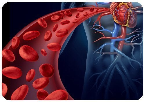 Punajuuri auttaa pitämään verisuonista huolta