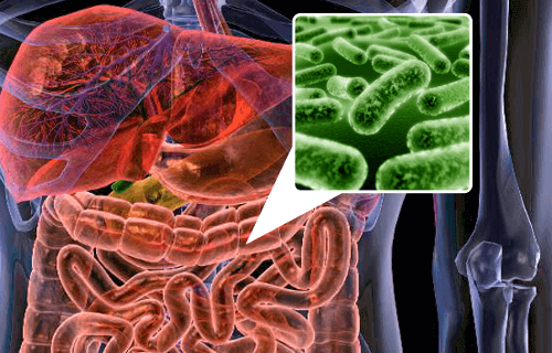 Suolisto ja probiootit