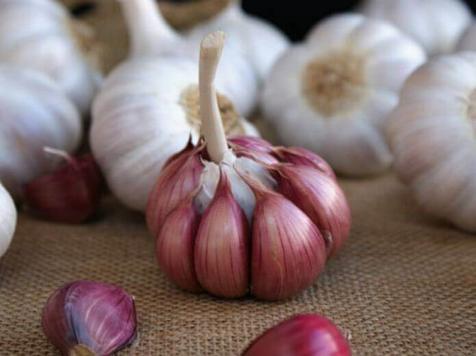 Valkosipuli auttaa alentamaan kolesterolia.