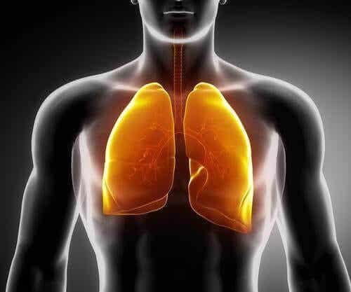 3 teetä keuhkojen vahvistamiseksi