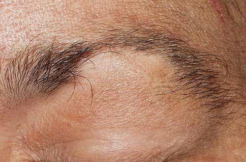 Harvenevatko kulmakarvasi ja silmäripsesi?
