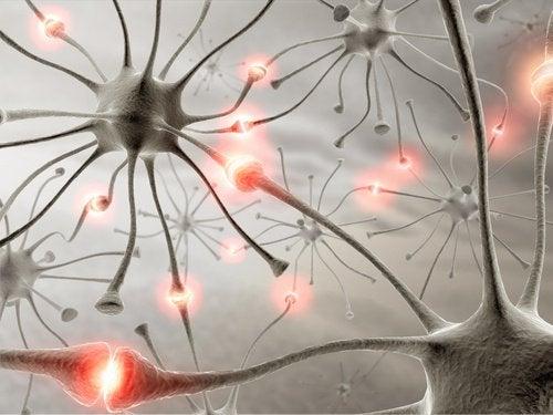 Näin kävely vaikuttaa aivoihin