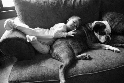 Lapsi ja koira nukkuvat