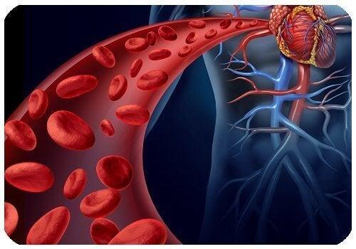 Punajuuri auttaa parantamaan verenkiertoa.