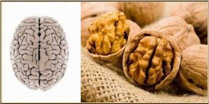 kehonosia muistuttavat ruoat: saksanpähkinät ja aivot