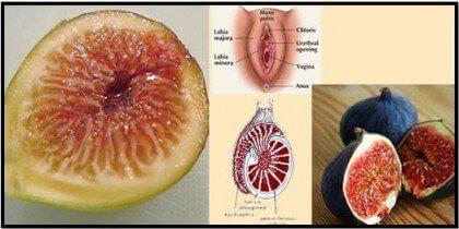 kehonosia muistuttavat ruoat: viikuna ja sukupuolielimet