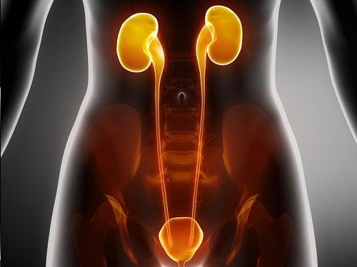 Kotihoidot munuaisten, rakon ja virtsateiden tulehduksiin