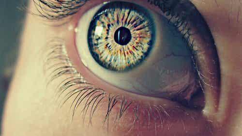 Silmien pupillit - 7 outoa faktaa