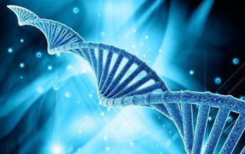 Yksi stýy vyötärölihavuudelle voi olla geeniperimä.