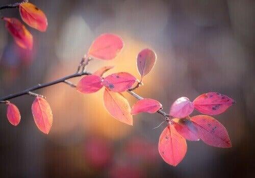 puolukan värikkäät lehdet