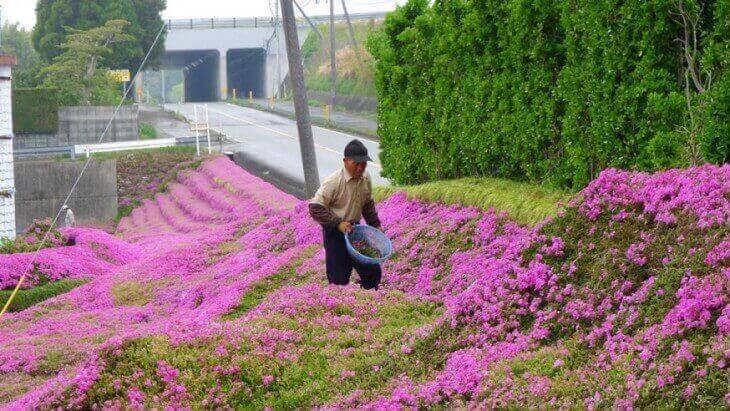 mies istuttaa kukkia sokealle vaimolleen